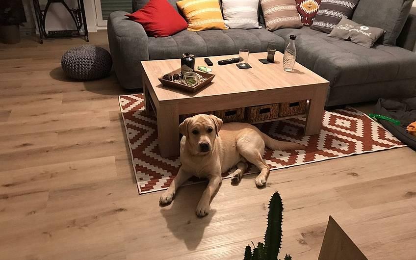 Hund im Wohnzimmer